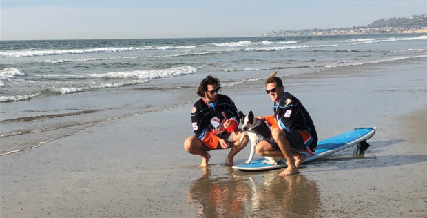 """San Diego Gulls Announce 2018 """"Pucks & Paws"""" Calendar to Benefit Shelter to Soldier"""