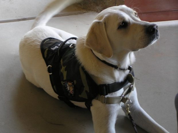 How and Why to Get a Service Dog? | Homeland Magazine