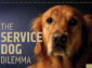The Service Dog Dilemma